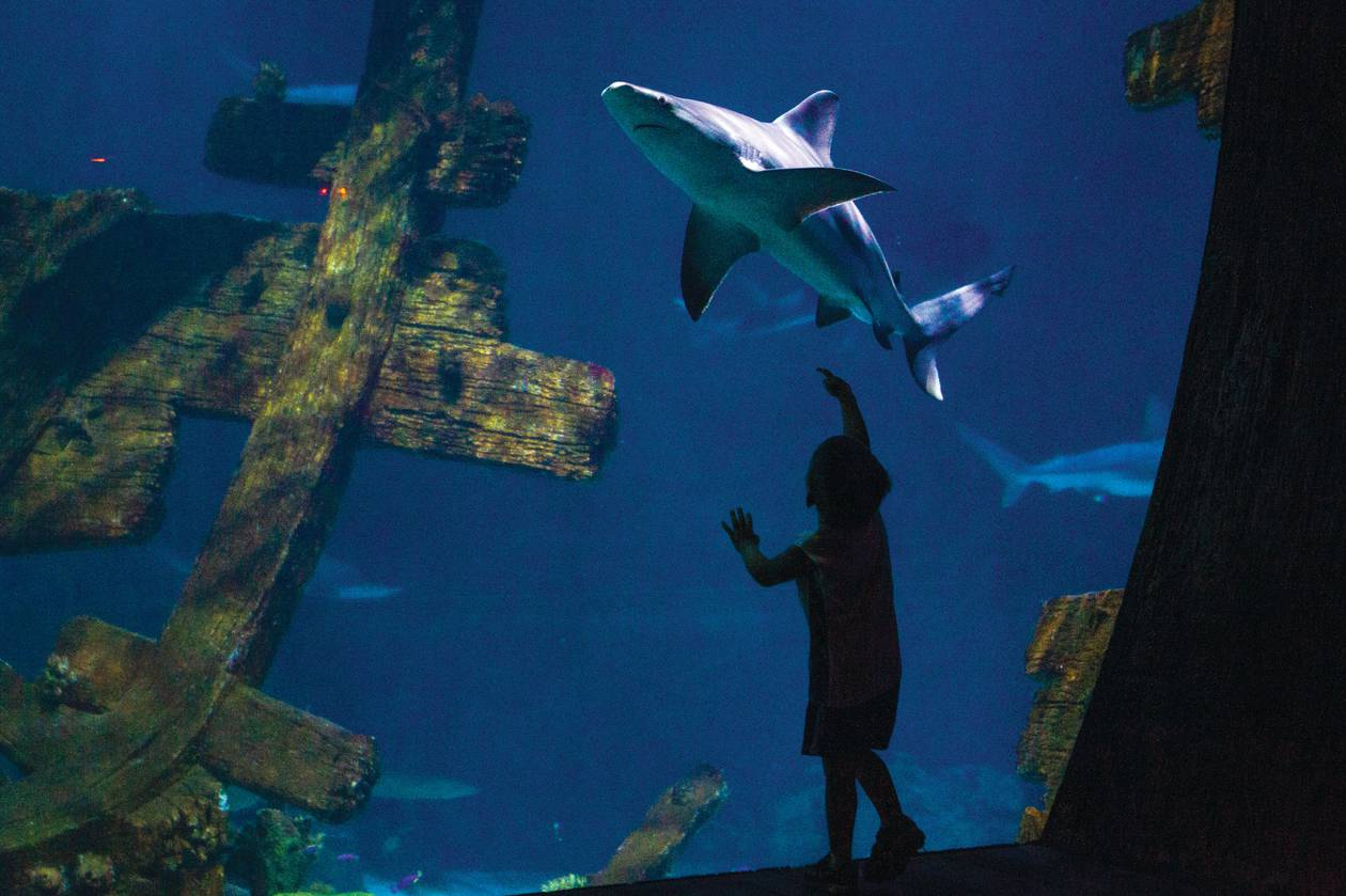 From the Shark Reef to the High Roller to the 'Hunger Games' exhibition and beyond.